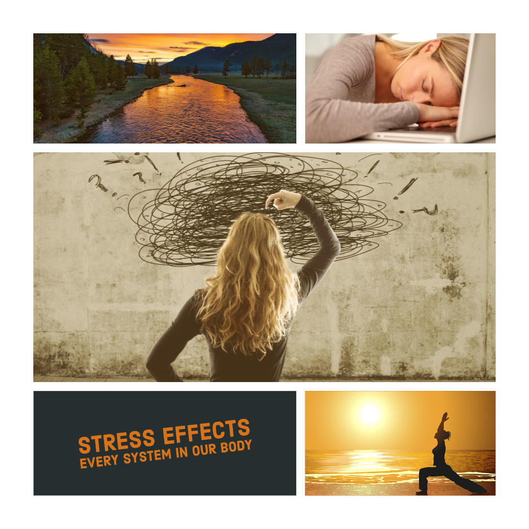 Stress Effects Every System in your body
